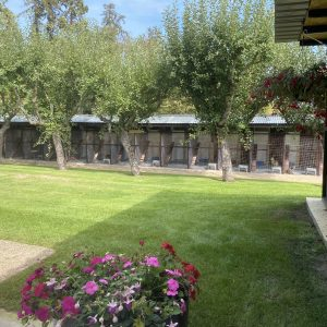 Cattery in Surrey